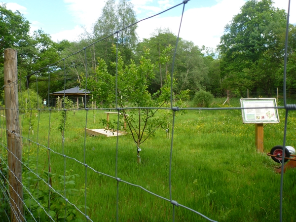 Glenorchy and Innishail Community Orchard and Woodland Garden